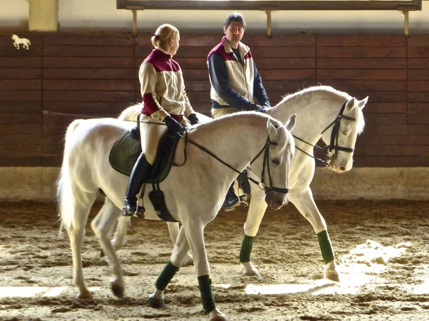 horses-600212_960_720