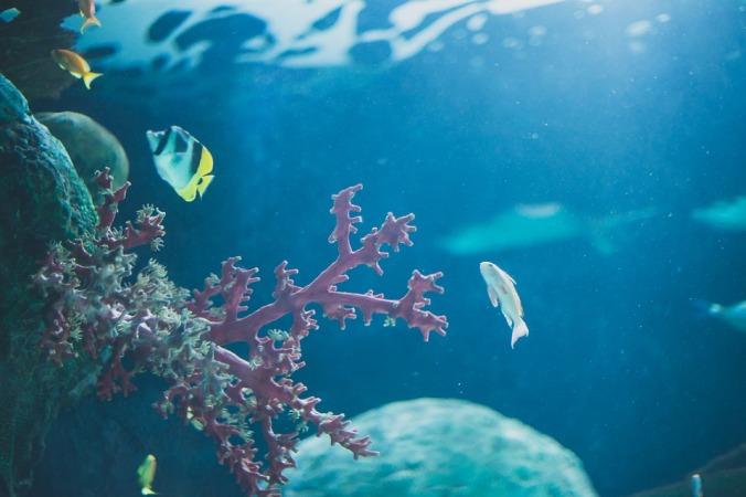 ocean-1663168_960_720.jpg